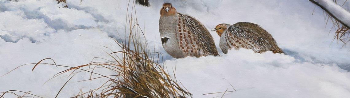 Welcome at Pieter Verstappen Wildlife Art