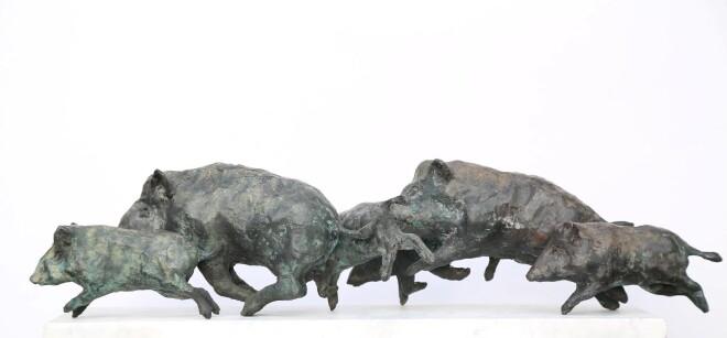 Wild boar  3-6-B