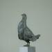 Black grouse - B