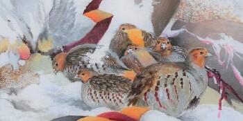 Partridges-M