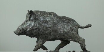 Wild boar-B